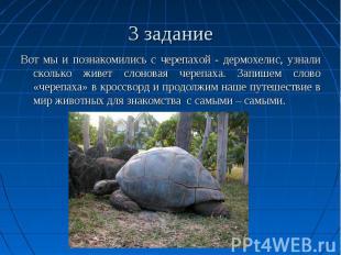 3 задание Вот мы и познакомились с черепахой - дермохелис, узнали сколько живет