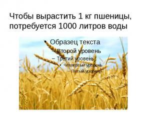 Чтобы вырастить 1 кг пшеницы, потребуется 1000 литров воды