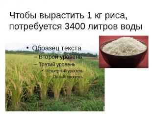 Чтобы вырастить 1 кг риса, потребуется 3400 литров воды