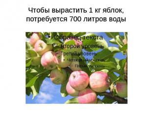 Чтобы вырастить 1 кг яблок, потребуется 700 литров воды