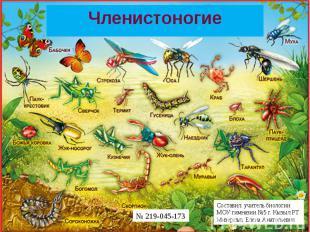 Составил: учитель биологии МОУ гимназии №5 города Кызыла Республики Тыва Мизерны