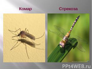 Комар Стрекоза