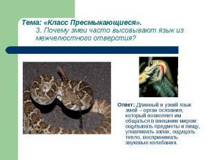 Ответ: Длинный и узкий язык змей – орган осязания, который позволяет им общаться