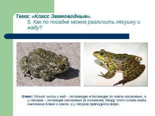 Ответ: Объект охоты у жаб – ползающие и бегающие по земле насекомые, а у лягушки