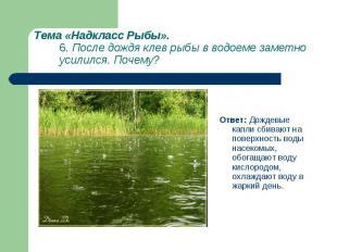 Ответ: Дождевые капли сбивают на поверхность воды насекомых, обогащают воду кисл