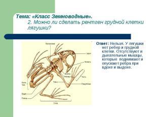 Ответ: Нельзя. У лягушки нет ребер и грудной клетки. Отсутствуют и дыхательные м