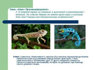 Ответ: Хамелеон. Изменчивость окраски обусловлена перераспределением пигментов к