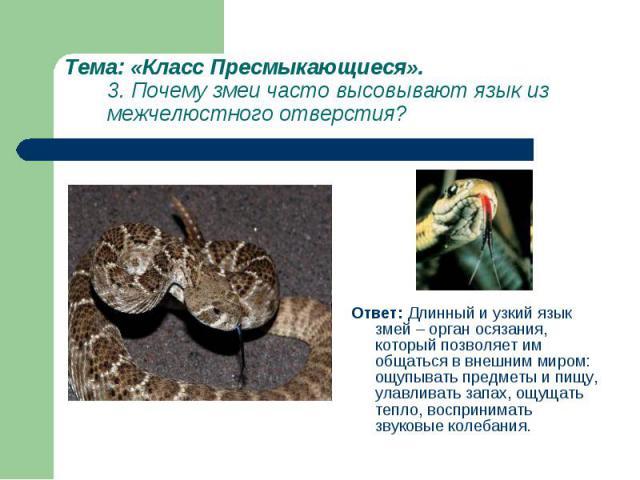 Ответ: Длинный и узкий язык змей – орган осязания, который позволяет им общаться в внешним миром: ощупывать предметы и пищу, улавливать запах, ощущать тепло, воспринимать звуковые колебания. Ответ: Длинный и узкий язык змей – орган осязания, который…