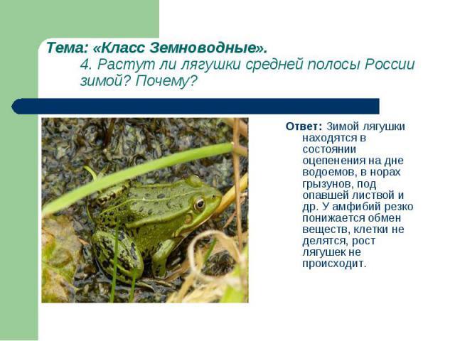 Ответ: Зимой лягушки находятся в состоянии оцепенения на дне водоемов, в норах грызунов, под опавшей листвой и др. У амфибий резко понижается обмен веществ, клетки не делятся, рост лягушек не происходит. Ответ: Зимой лягушки находятся в состоянии оц…