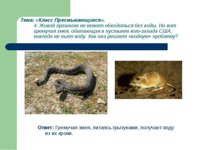 Ответ: Гремучая змея, питаясь грызунами, получает воду из их крови. Ответ: Гремучая змея, питаясь грызунами, получает воду из их крови.