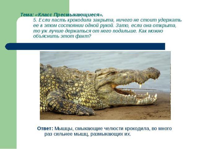 Ответ: Мышцы, смыкающие челюсти крокодила, во много раз сильнее мышц, размыкающих их. Ответ: Мышцы, смыкающие челюсти крокодила, во много раз сильнее мышц, размыкающих их.