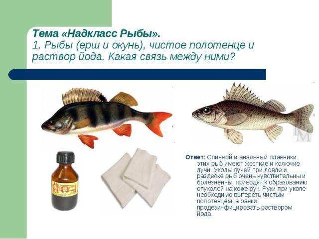 Ответ: Спинной и анальный плавники этих рыб имеют жесткие и колючие лучи. Уколы лучей при ловле и разделке рыб очень чувствительны и болезненны, приводят к образованию опухолей на коже рук. Руки при уколе необходимо вытереть чистым полотенцем, а ран…