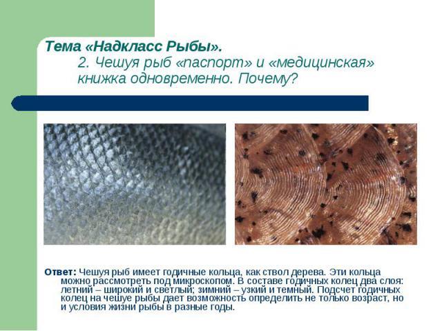 Ответ: Чешуя рыб имеет годичные кольца, как ствол дерева. Эти кольца можно рассмотреть под микроскопом. В составе годичных колец два слоя: летний – широкий и светлый; зимний – узкий и темный. Подсчет годичных колец на чешуе рыбы дает возможность опр…