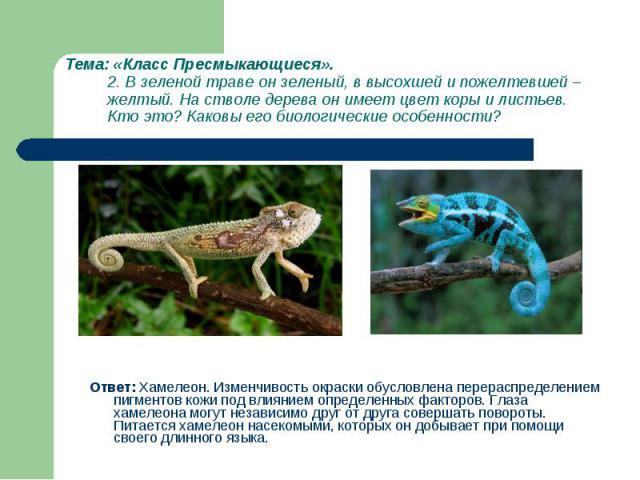 Ответ: Хамелеон. Изменчивость окраски обусловлена перераспределением пигментов кожи под влиянием определенных факторов. Глаза хамелеона могут независимо друг от друга совершать повороты. Питается хамелеон насекомыми, которых он добывает при помощи с…