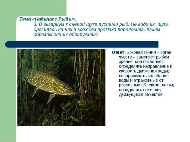 Ответ: Боковая линия – орган чувств – заменяет рыбам зрение, она позволяет: определять направление и скорость движения воды; воспринимать колебание воды и отраженные от различных объектов волны; определять величину движущихся объектов. Ответ: Бокова…