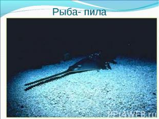 Какая рыба называется так же, Какая рыба называется так же, как инструмент плотн