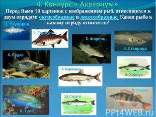 Перед Вами 10 картинок с изображением рыб, относящихся к двум отрядам: окунеобра