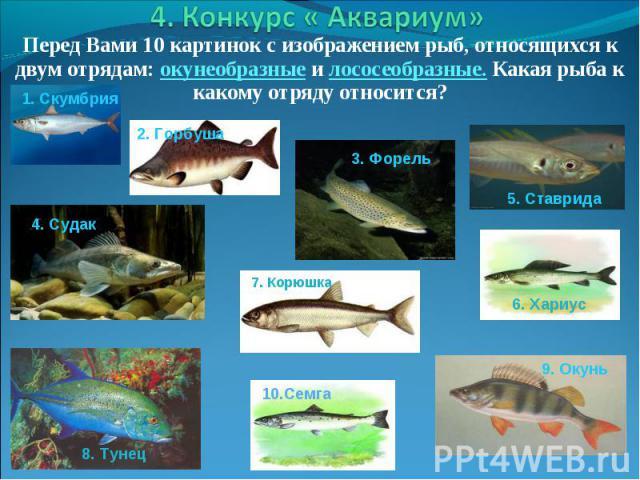 Перед Вами 10 картинок с изображением рыб, относящихся к двум отрядам: окунеобразные и лососеобразные. Какая рыба к какому отряду относится? Перед Вами 10 картинок с изображением рыб, относящихся к двум отрядам: окунеобразные и лососеобразные. Какая…