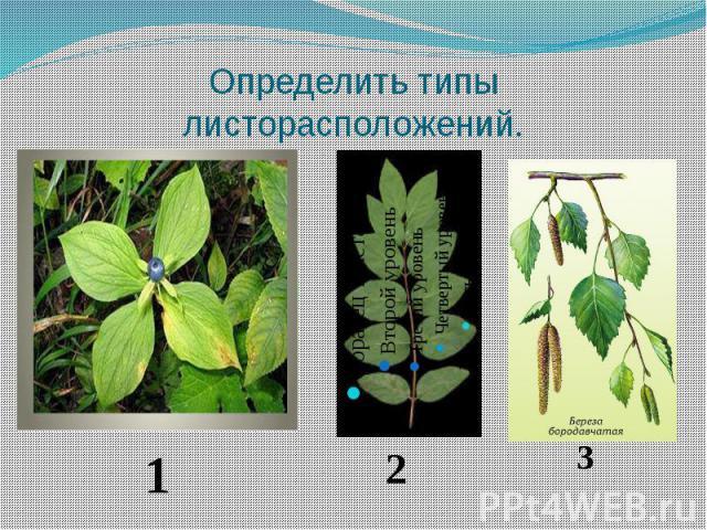 Определить типы листорасположений.