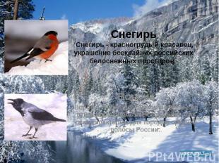 Снегирь Снегирь - красногрудый красавец, украшение бескрайних российских белосне