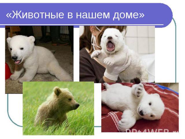 «Животные в нашем доме»