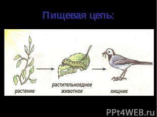 Пищевая цепь: