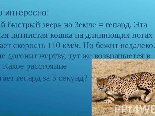а) Это интересно: Самый быстрый зверь на Земле = гепард. Эта стройная пятнистая кошка на длиннющих ногах развивает скорость 110 км/ч. Но бежит недалеко. Если сразу не догонит жертву, тут же возвращается в засаду. Какое расстояние пробегает гепард за…