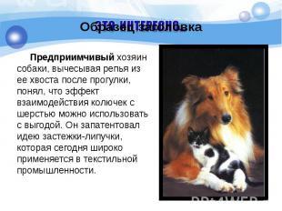 Предприимчивый хозяин собаки, вычесывая репья из ее хвоста после прогулки, понял