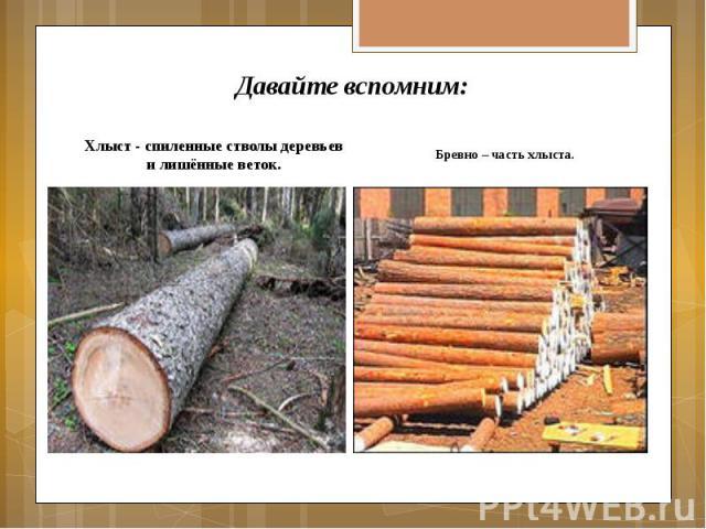 Давайте вспомним: Хлыст - спиленные стволы деревьев и лишённые веток.