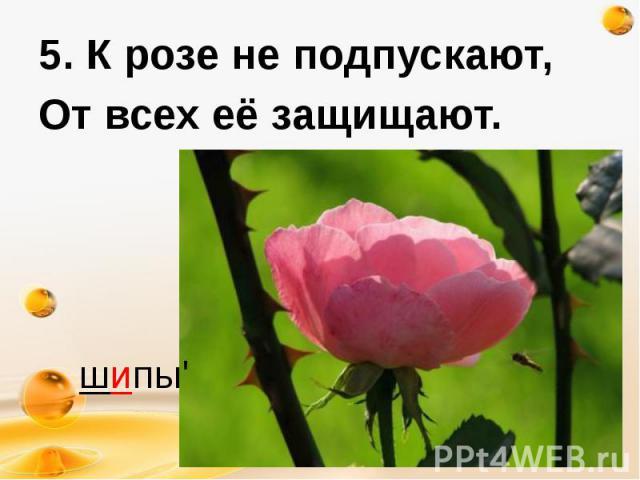 5. К розе не подпускают, 5. К розе не подпускают, От всех её защищают.
