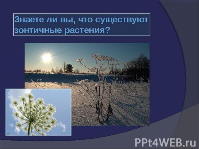 существуют зонтичные растения? существуют зонтичные растения?