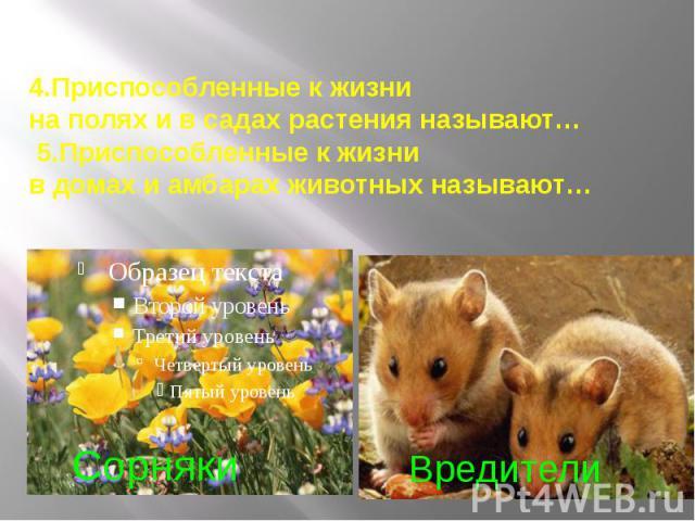 4.Приспособленные к жизни на полях и в садах растения называют… 5.Приспособленные к жизни в домах и амбарах животных называют…