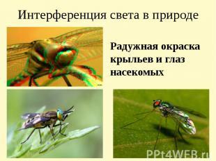 Интерференция света в природе Радужная окраска крыльев и глаз насекомых