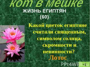 Какой цветок египтяне считали священным, символом солнца, скромности и невинност
