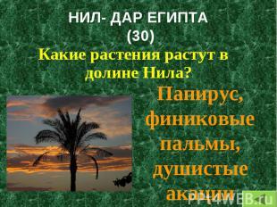 Какие растения растут в долине Нила? Какие растения растут в долине Нила?