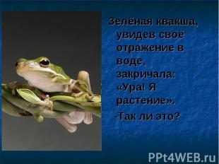 Зелёная квакша, увидев своё отражение в воде, закричала: «Ура! Я растение». Зелё