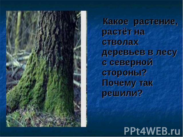 Какое растение, растёт на стволах деревьев в лесу с северной стороны? Почему так решили? Какое растение, растёт на стволах деревьев в лесу с северной стороны? Почему так решили?