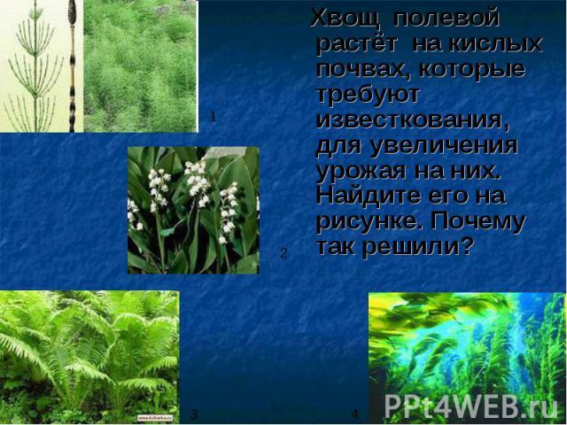 Хвощ полевой растёт на кислых почвах, которые требуют известкования, для увеличения урожая на них. Найдите его на рисунке. Почему так решили? Хвощ полевой растёт на кислых почвах, которые требуют известкования, для увеличения урожая на них. Найдите …