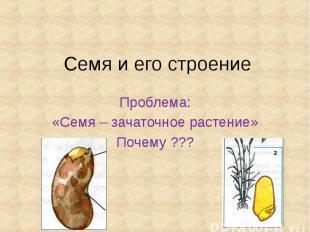 Семя и его строение Проблема: «Семя – зачаточное растение» Почему ???