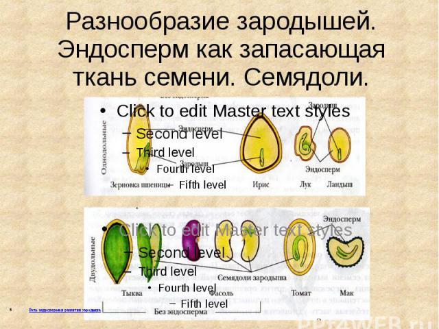 Разнообразие зародышей. Эндосперм как запасающая ткань семени. Семядоли.