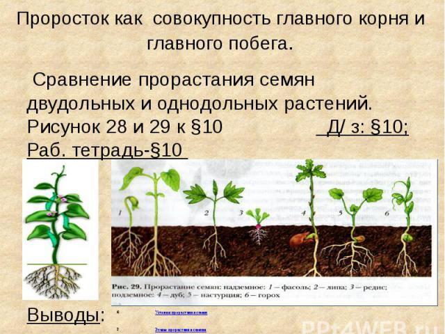Проросток как совокупность главного корня и главного побега. Сравнение прорастания семян двудольных и однодольных растений. Рисунок 28 и 29 к §10 Д/ з: §10; Раб. тетрадь-§10 Выводы: