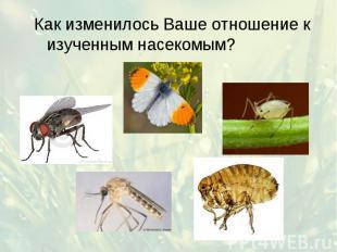 Как изменилось Ваше отношение к изученным насекомым? Как изменилось Ваше отношен