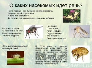 О каких насекомых идет речь?