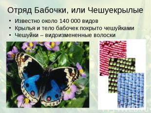 Отряд Бабочки, или Чешуекрылые Известно около 140 000 видов Крылья и тело бабоче