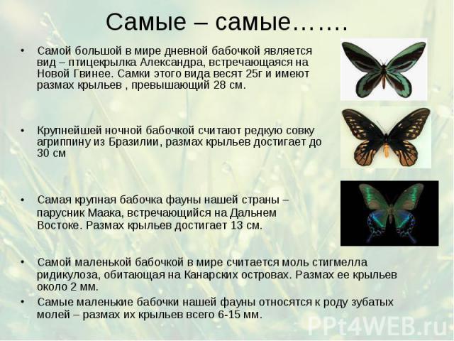Самые – самые……. Самой маленькой бабочкой в мире считается моль стигмелла ридикулоза, обитающая на Канарских островах. Размах ее крыльев около 2 мм. Самые маленькие бабочки нашей фауны относятся к роду зубатых молей – размах их крыльев всего 6-15 мм.