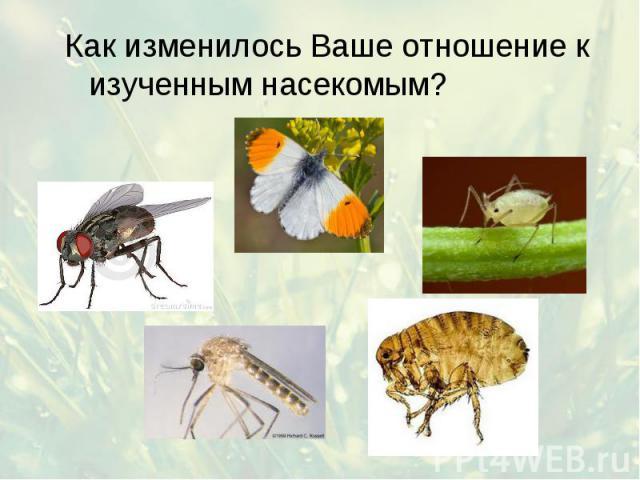 Как изменилось Ваше отношение к изученным насекомым? Как изменилось Ваше отношение к изученным насекомым?