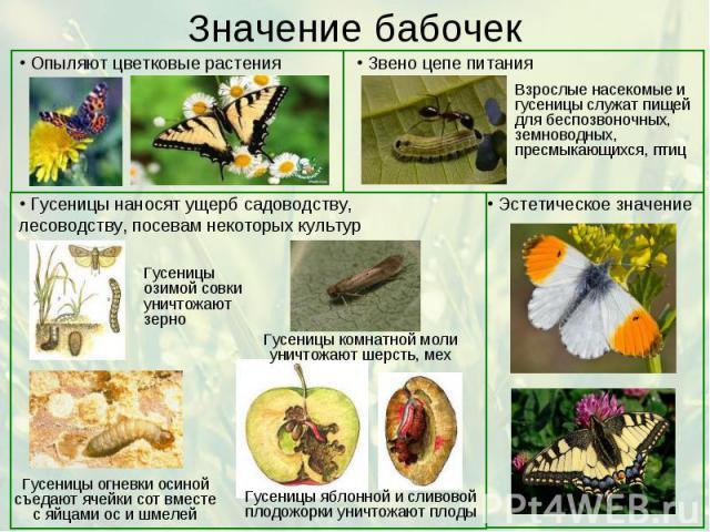 Значение бабочек