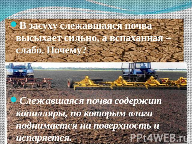 В засуху слежавшаяся почва высыхает сильно, а вспаханная – слабо. Почему?? В засуху слежавшаяся почва высыхает сильно, а вспаханная – слабо. Почему?? Слежавшаяся почва содержит капилляры, по которым влага поднимается на поверхность и испаряется.