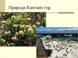 Природа Капских гор