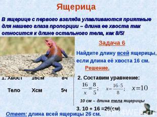Задача 6 Найдите длину всей ящерицы, если длина её хвоста 16 см.